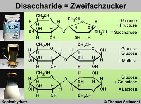 Kohlenhydrate - SEILNACHT